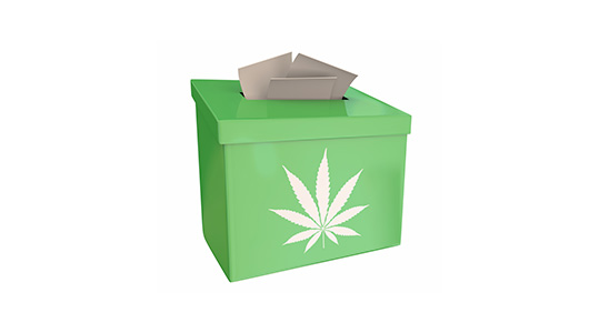 CANNABIS WINS BIG IN LOCAL, NATIONAL ELECTIONS